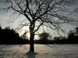 park_zima